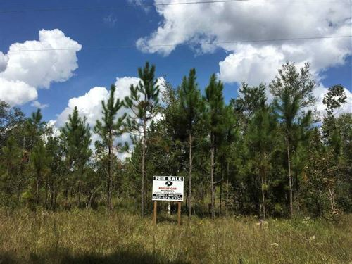 72 Acres Land For Sale in Camden : White Oak : Camden County : Georgia