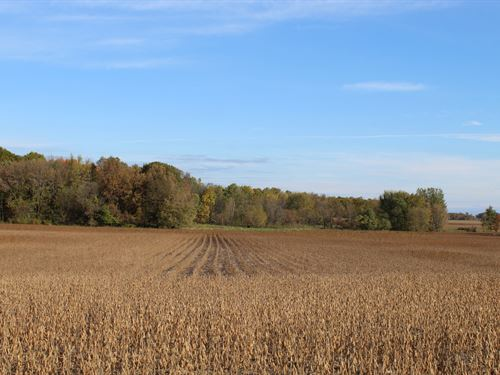 Princeton Area 105 Acres For Sale : Princeton : Mille Lacs County : Minnesota