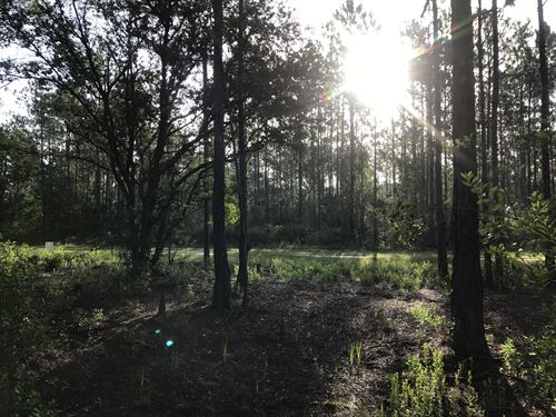 Great Flagler Estates Lot Mobile Ok : Hastings : Saint Johns County : Florida