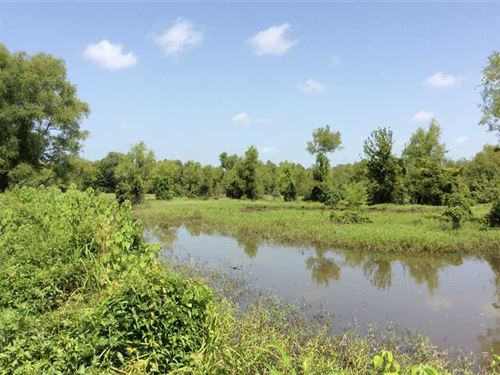 Cypress Tract, Natchitoches Parish : Flora : Natchitoches Parish : Louisiana
