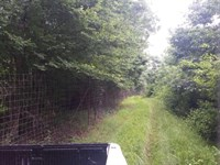 555 Acre Hunting Property Adams : Natchez : Adams County : Mississippi