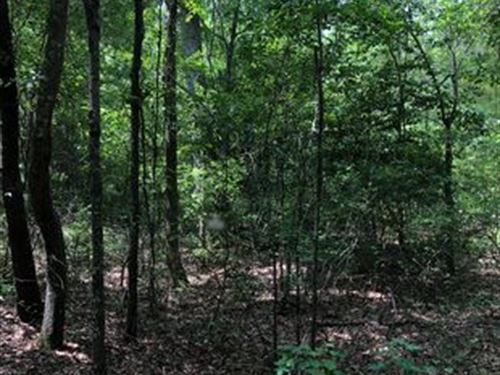 Beautiful Wooded Property : Saint Matthews : Calhoun County : South Carolina
