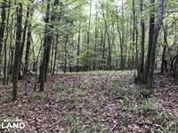 Yalobusha County Hardwood Timber : Coffeeville : Yalobusha County : Mississippi