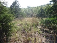 20 Acres Vacant Land Missouri : Gravois Mills : Morgan County : Missouri