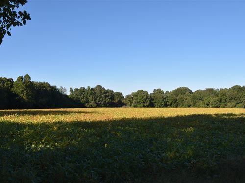 Prime Development Land & Historic : Jackson : Madison County : Tennessee