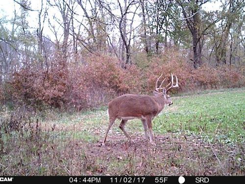 Van Buren Co, IA Hunting Land : Keosauqua : Van Buren County : Iowa