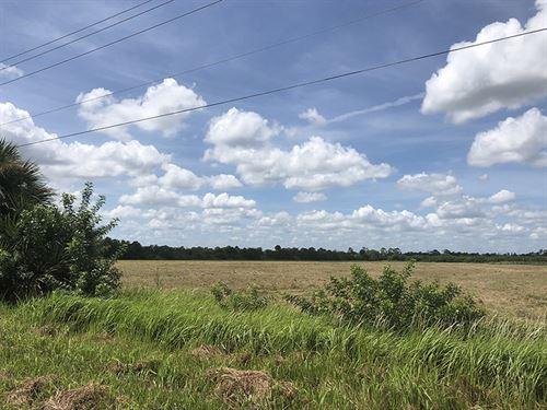 Susquehanna 20 Acres : Vero Beach : Polk County : Florida