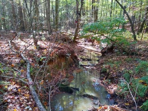 54.2 Acres, Fairfield County : Winnsboro : Fairfield County : South Carolina