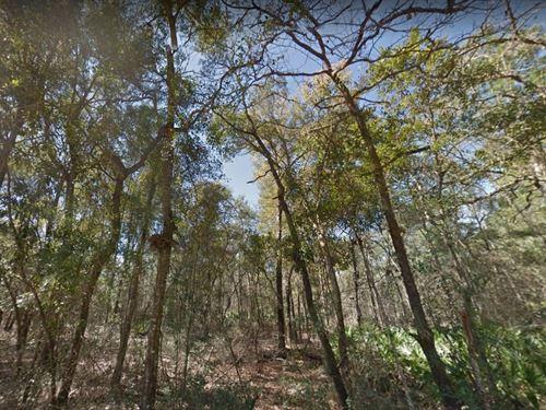 Gilchrist County, Fl $10,000 Neg : Trenton : Gilchrist County : Florida