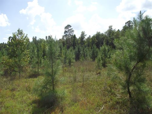 Summertown Country Estates Lot 16 : Summertown : Emanuel County : Georgia