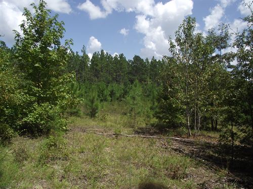 Summertown Country Estates Lot 15 : Summertown : Emanuel County : Georgia