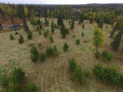 5 Acres of Privacy For Hunting And : Ninilchik : Kenai Peninsula Borough : Alaska