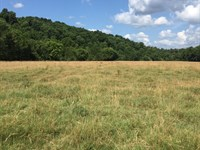 Arkansas Pasture Land Marshall, AR : Marshall : Searcy County : Arkansas