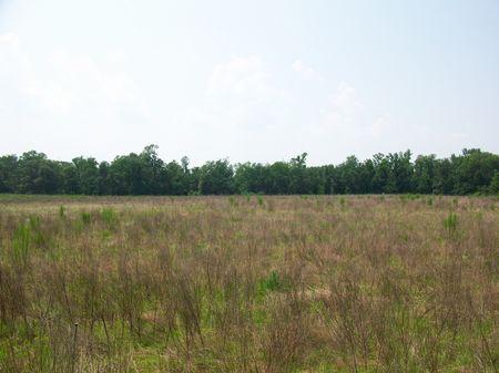 Old Country Farm : Cochran : Bleckley County : Georgia