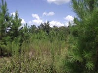Summertown Country Estates Lot 9 : Summertown : Emanuel County : Georgia