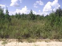Summertown Country Estates Lot 8 : Summertown : Emanuel County : Georgia