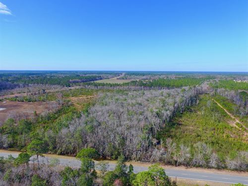 42 Acres With Pond Site : Hortense : Brantley County : Georgia