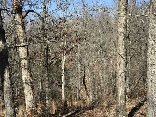 Bare Creek Club, 55 Acres of Woods : Midway : Baxter County : Arkansas