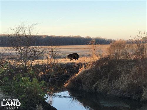 Bear And Duck Paradise : Creswell : Washington County : North Carolina