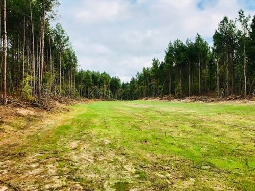 104 Acres Timberland For Sale Montg : Kilmichael : Montgomery County : Mississippi