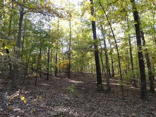 46.92 Wooded Acres Located Just 7 : Salem : Dent County : Missouri