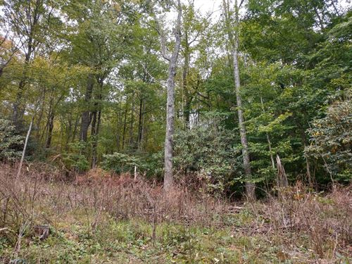 Wooded Building Lots 4.66 Acres : Independence : Grayson County : Virginia