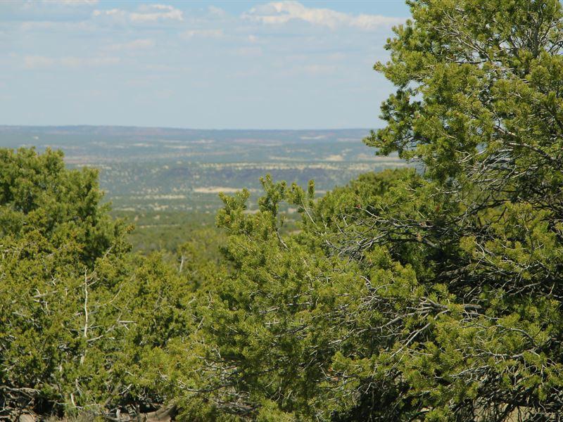 Arizona's Sierra Highlands Ranch : Saint Johns : Apache County : Arizona