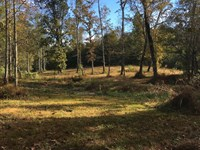 20.7+/-Acres In Cleveland, Creek : Cleveland : Bradley County : Tennessee