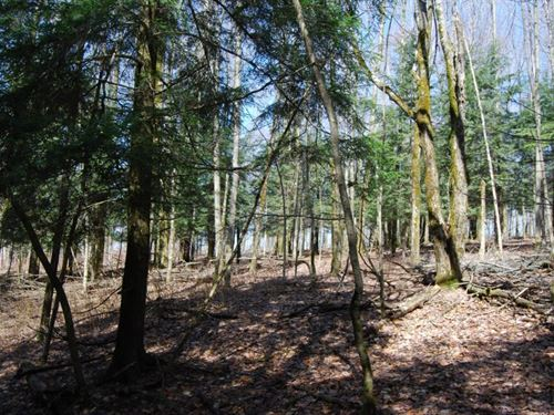 Secluded 19.9 Acres : Burlington : Otsego County : New York