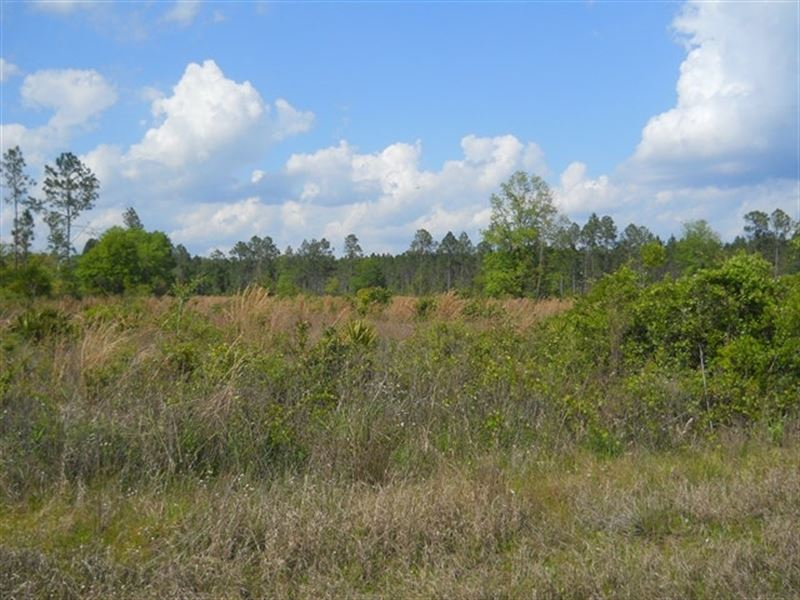 Comp 144A-Cr 229 N Raiford : Raiford : Union County : Florida