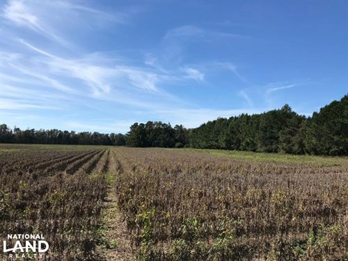 Hemingway Home Site : Hemingway : Williamsburg County : South Carolina