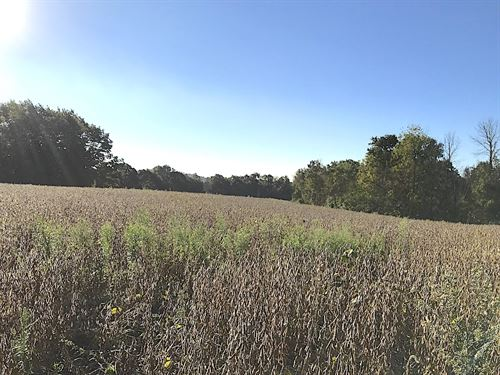 Patton Mills Rd, 39 Acres : Stockport : Washington County : Ohio