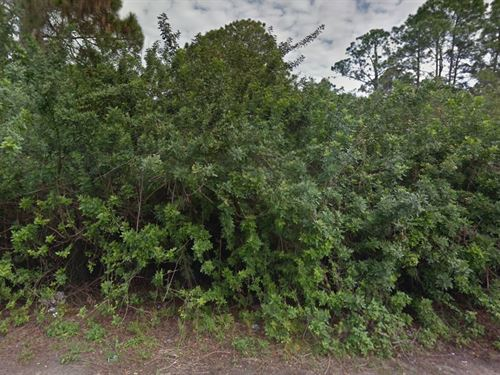 Lee County .50 Acre $85K, Neg : Ft Myers : Lee County : Florida