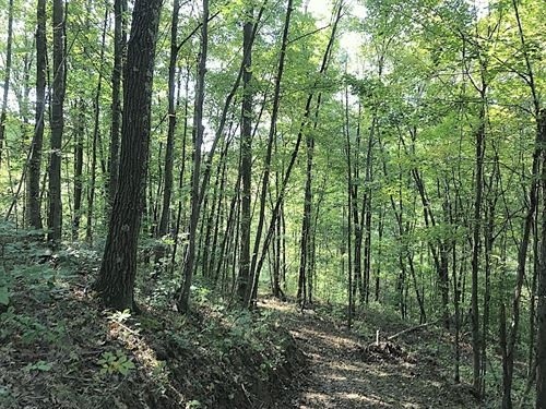 Morganstern Ln Lot 2, 30 Acres : Beverly : Morgan County : Ohio
