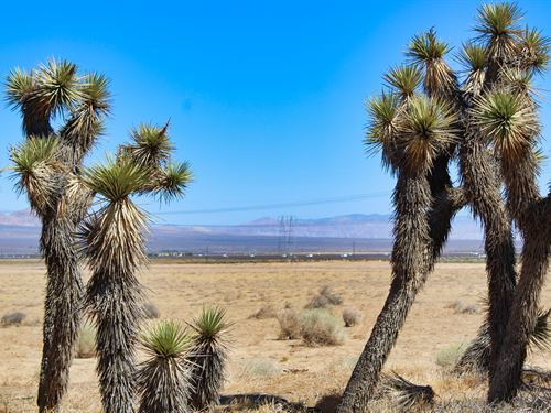 Better Call Saul Special : Lancaster : Los Angeles County : California