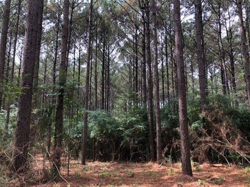 11.5 Acres / Hall Road / Magnolia : Magnolia : Pike County : Mississippi