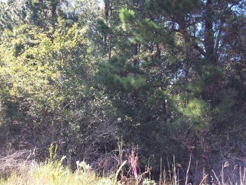Buxton Creek Tract, Calcasieu Pari : Dequincy : Calcasieu Parish : Louisiana