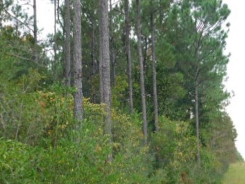82 Acres In Stone County In Perkins : Perkinston : Stone County : Mississippi