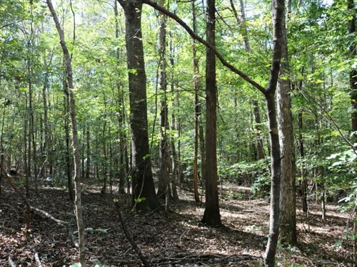 190 Acres In Attala And Leake Count : Carthage : Attala County : Mississippi