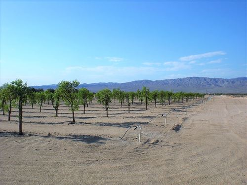 Prime 40 Acres Newberry Springs : Newberry Springs : San Bernardino County : California