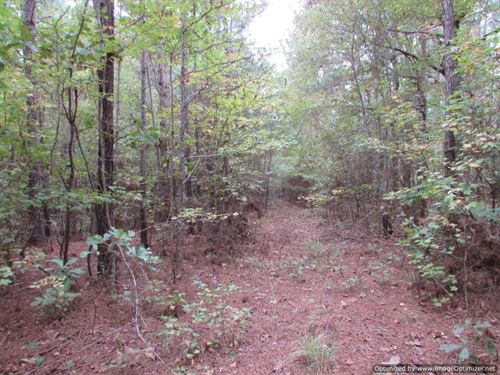 Small Hunting Tract : Pickens : Madison County : Mississippi