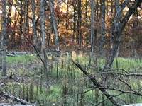 Very Unique 32 Acre Hunting Tract : Cole Camp : Benton County : Missouri