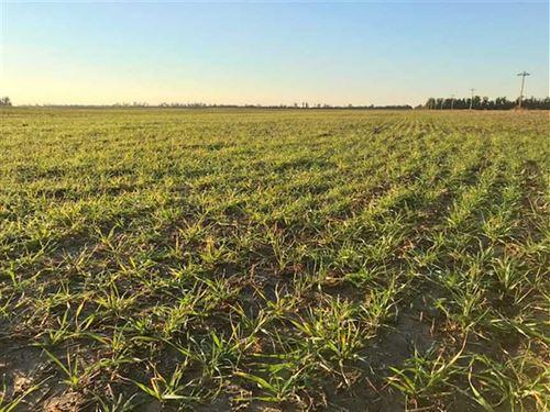 783 Acres of Farm Land And Hunt : Saint John : Stafford County : Kansas