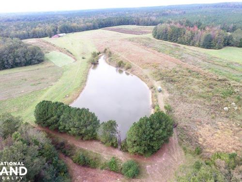 Kinterbish Creek Hunting, Timber : Kinterbish : Sumter County : Alabama