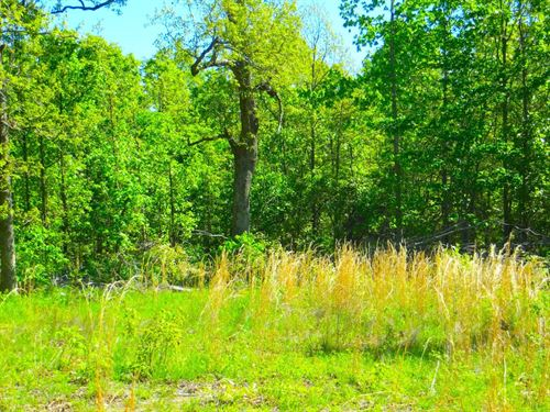 Acreage-Hunting-Timber For Sale : Mammoth Spring : Fulton County : Arkansas