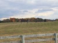 Prime Farm Land Development Land : Bowling Green : Warren County : Kentucky