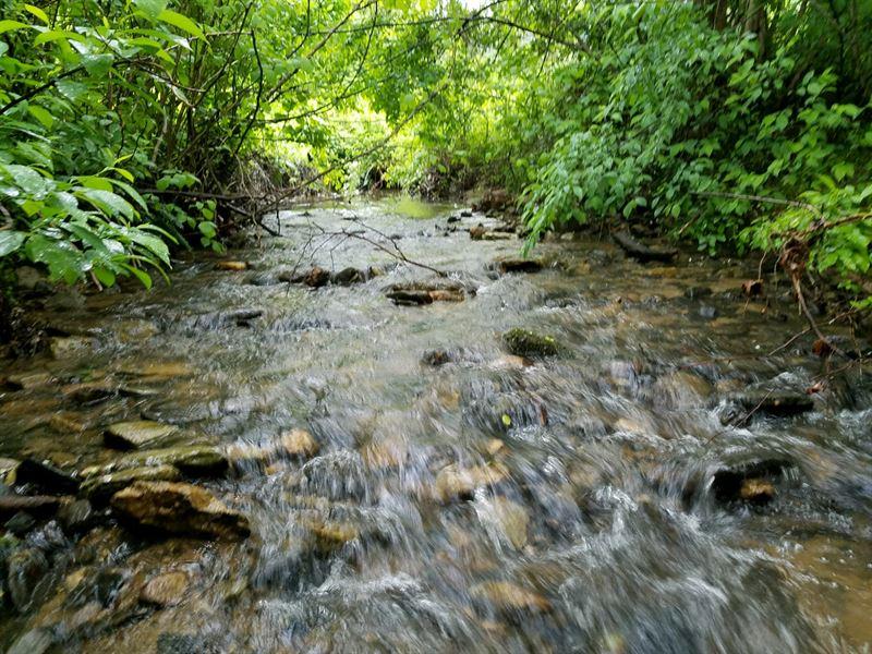 Trout Stream Paradise : Sparta : Alleghany County : North Carolina