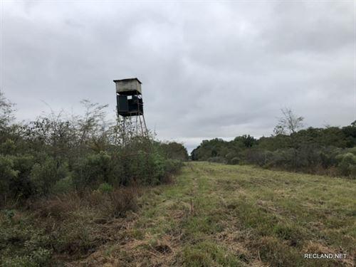 141 Ac, Wrp Hunting Tract Near Tow : Winnsboro : Franklin Parish : Louisiana