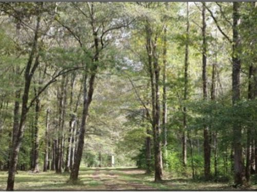 620 Acres In Neshoba County In Phil : Philadelphia : Neshoba County : Mississippi