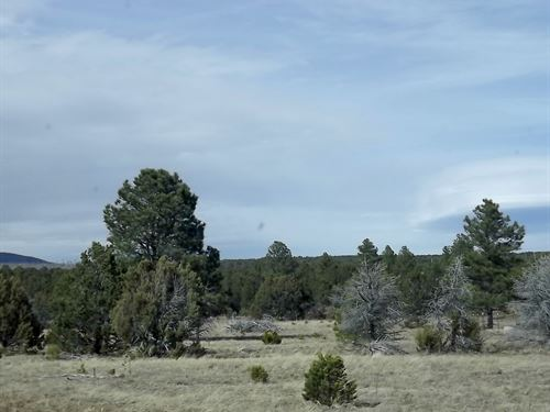 New Mexico Remote Secluded Wooded : Tijeras : Bernalillo County : New Mexico